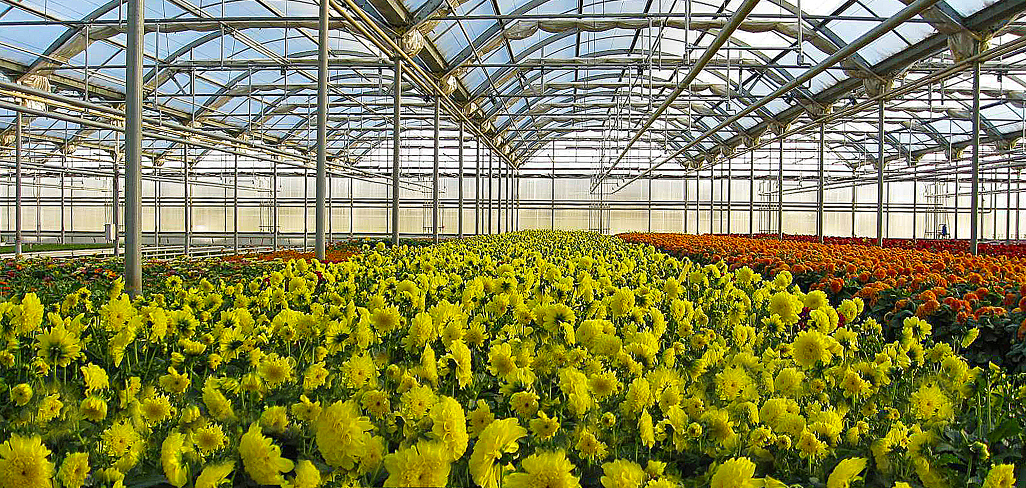 Pineae Greenhouses Where Innovation Continues To Grow